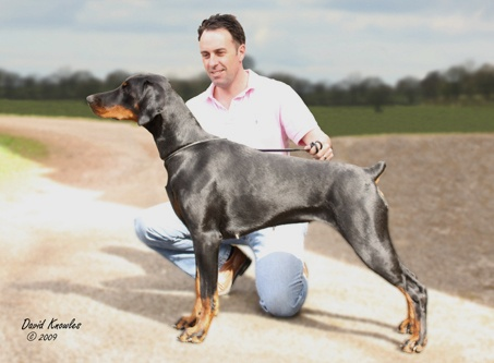 David Knowles Canine Photography