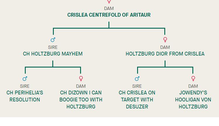Crislea Centrefold pedigree