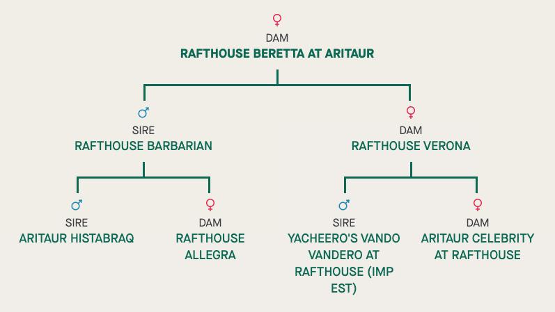 Rafthouse Beretta at Aritaur BH 08.06.2016